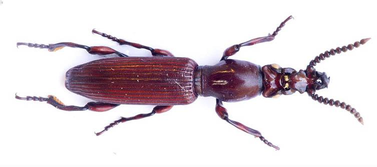Boletín Sociedad Andaluza de Entomología Vol. 7