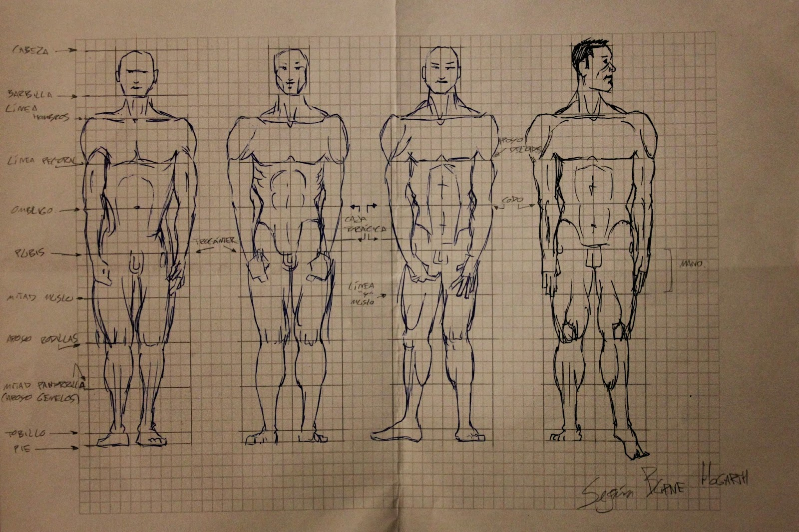 El blog de uno: Seguimos con las proporciones del cuerpo humano