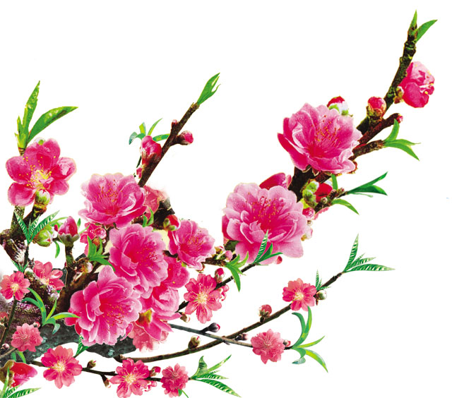 http://2.bp.blogspot.com/-SdIc9AWLZzc/UPQPBvk_byI/AAAAAAAAEL8/VXQ6qwkoRXw/s1600/hoa-dao-02.jpg