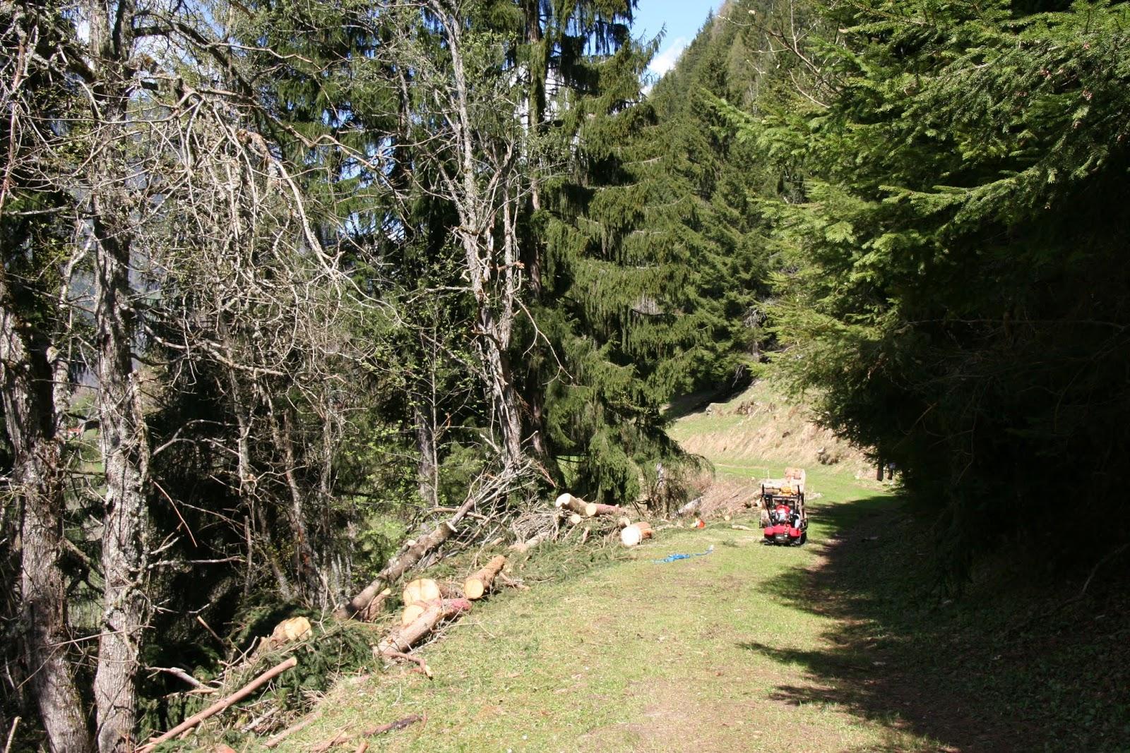 le potager d 39 andr e 2014 avril 22 tronc d 39 arbre d biter dans une forte pente danger. Black Bedroom Furniture Sets. Home Design Ideas