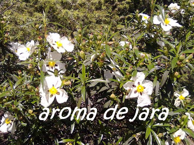 AROMA DE JARA