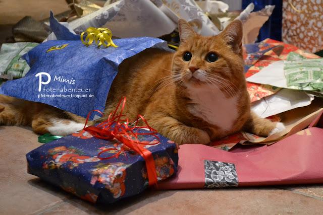Katze Mimi bekommt an Weihnachten ein Geschenk
