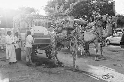 Camel Rickshaws