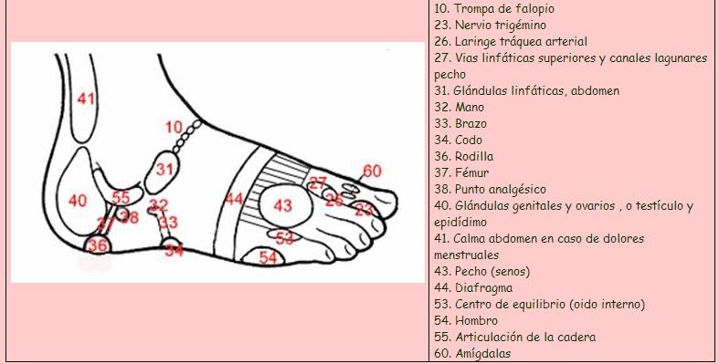 zona refleja en el exterior del pie en la reflexologia