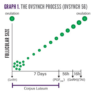 The Ovsynch Process for Ovsynch 56