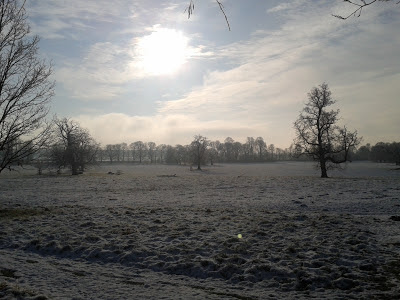 South facing view of snowy parkland at Beningbrough