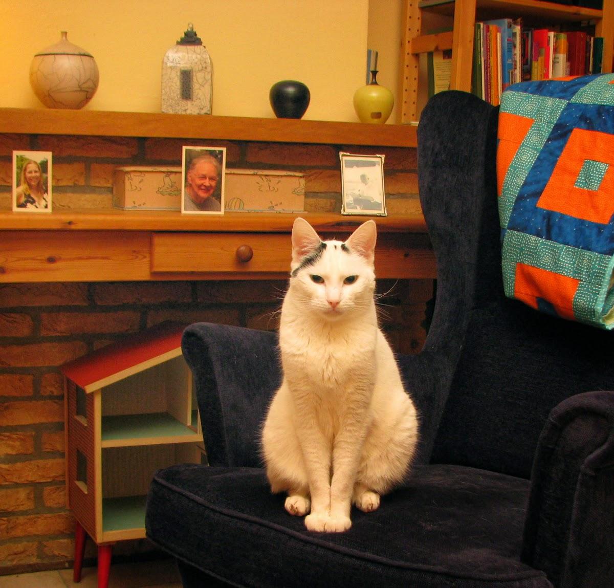 Cat Sam