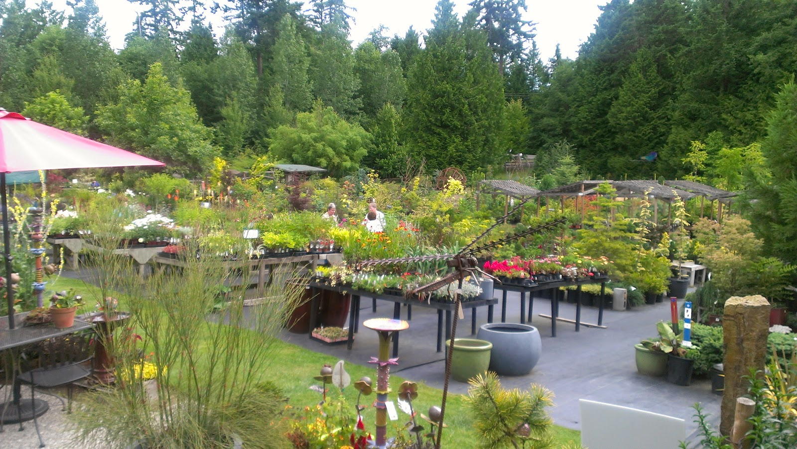 This Past Weekend I Finally Managed To Make My Way Up The Kitsap Peninsula Dragonfly Farms Nursery Whose Motto Is Where Abnormality Normality