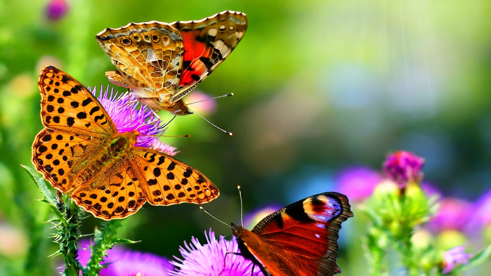 Papel de Parede Natureza Borboletas para pc 3d hd gratis Nature Wallpapers hd free