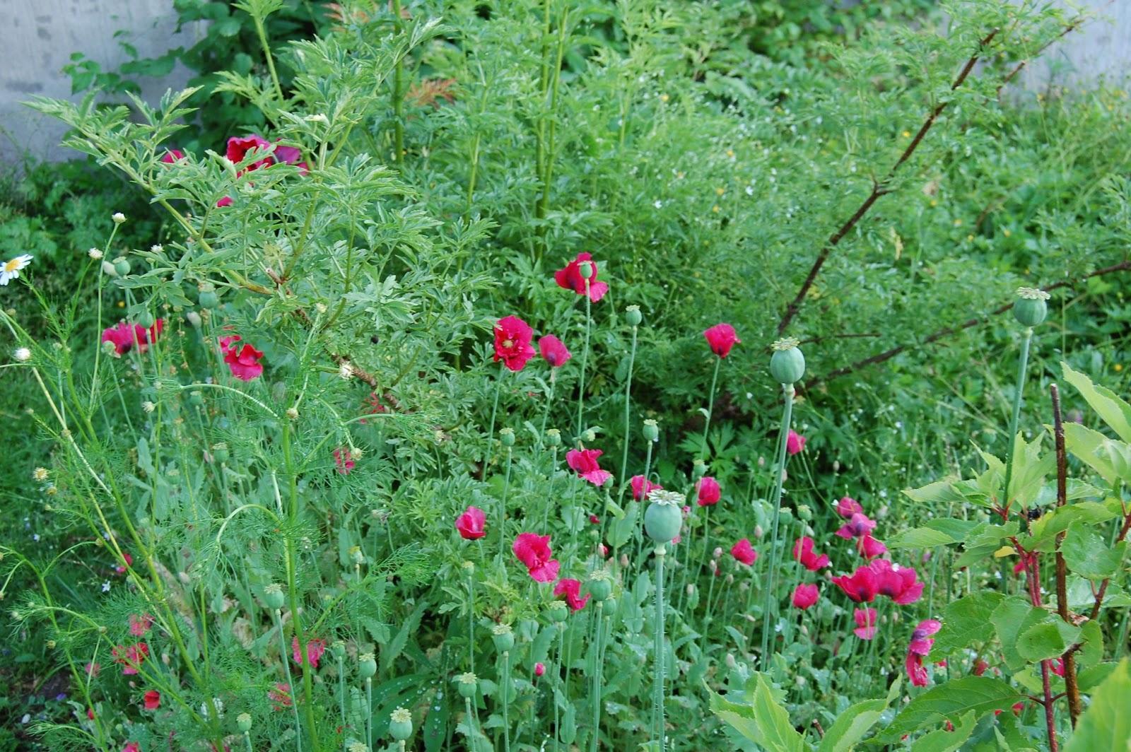 M/s design trädgård och keramik: vårt lilla ful/charmiga...