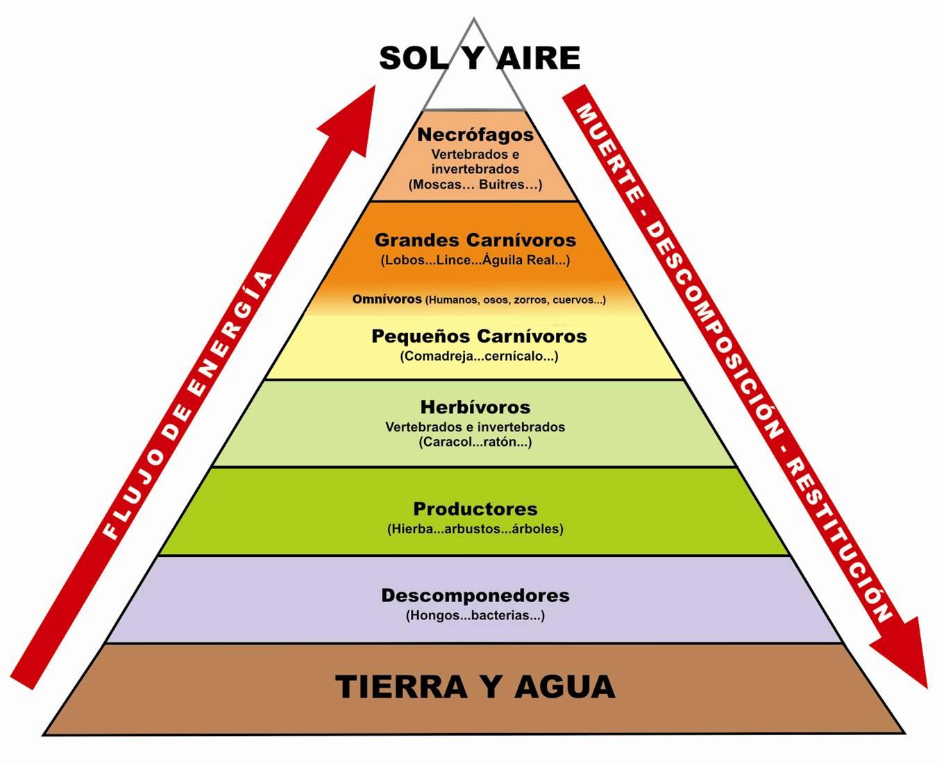 COLEGIO ALBARRACÍN: PIRÁMIDE TRÓFICA TEMA 4