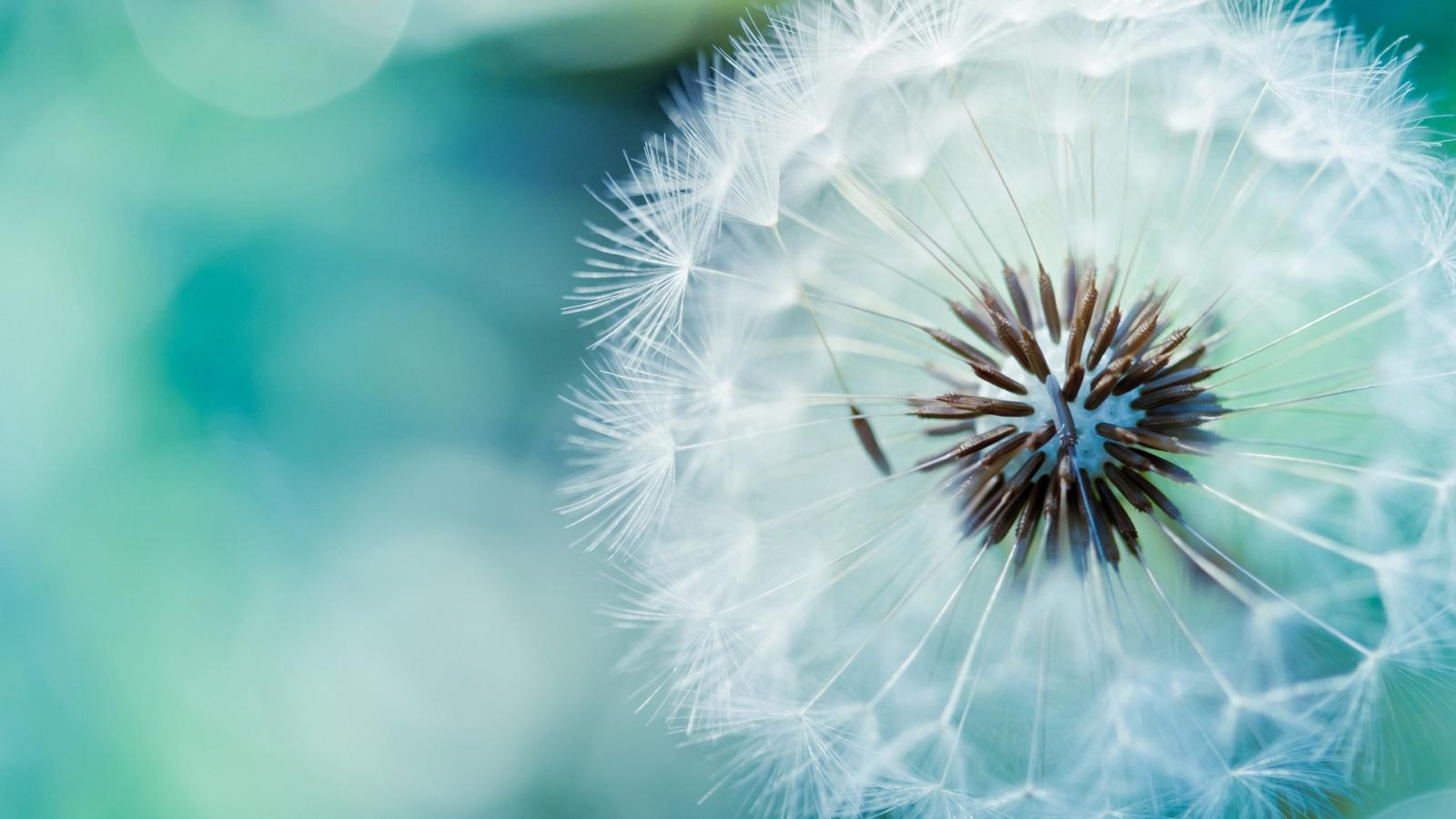 Tips Tips Kesehatan Untuk Anda 30 Wallpaper Bunga Paling Indah