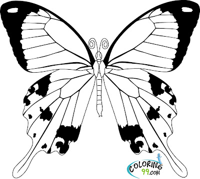 life cycle of a butterfly coloring page butterfly coloring pages