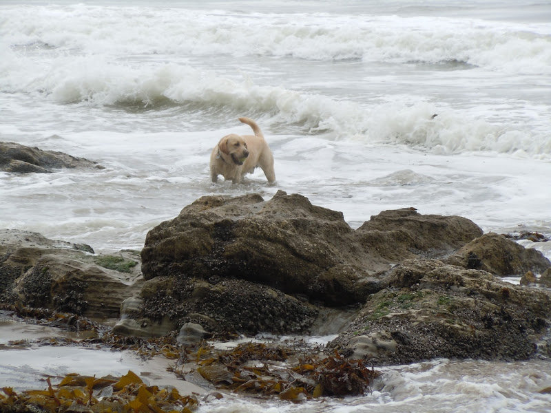 Hendry's Dog Beach surf pup