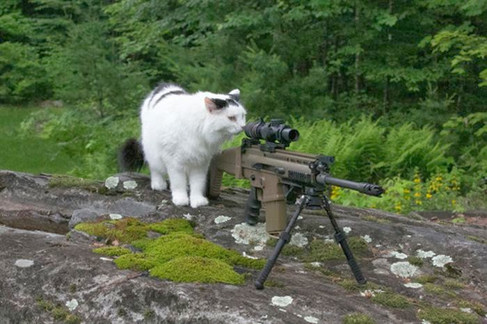 Funny cats - part 95 (40 pics + 10 gifs), cat pictures, cat investigates sniper weapon