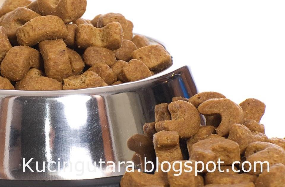 Diet untuk anjing
