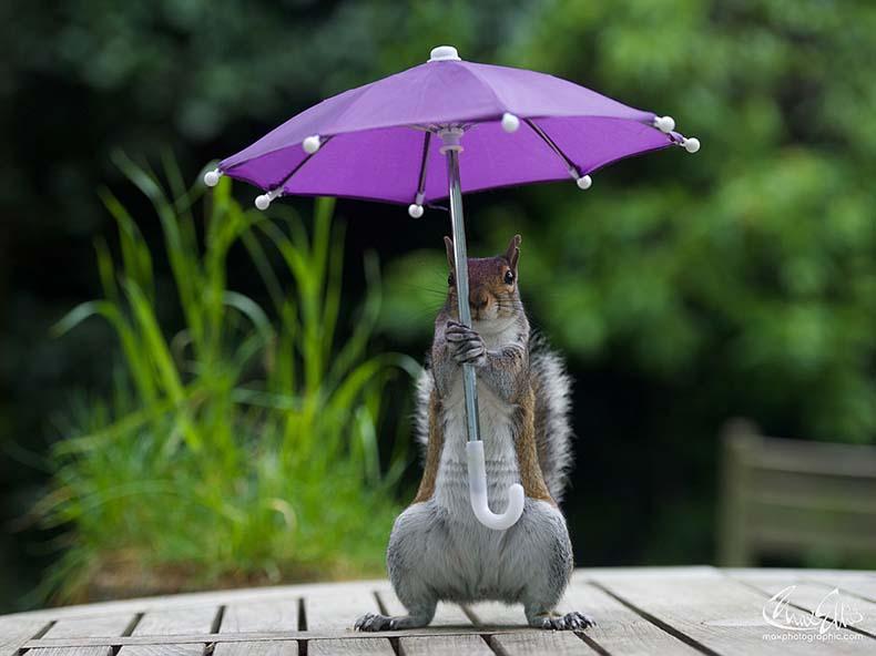 Imagen del día: Ardilla con paraguas se protegerse de la lluvia