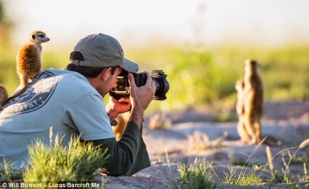 fotografiando a familia de suricatas