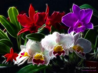 Seleção de orquídeas floridas no apartamento