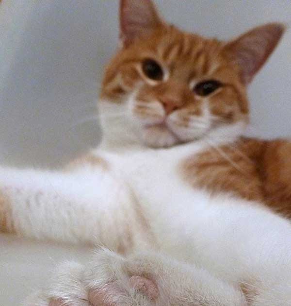 nothing to do with arbroath polydactyl cat saves shelter