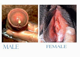 Kenapa alat kelamin pria keluar nanah