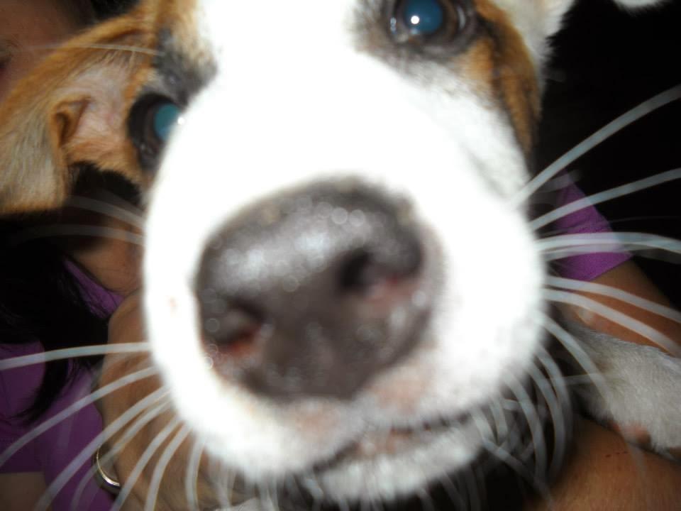 The Euthymic Dog