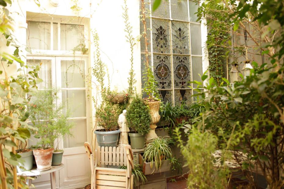 topfpflanzen f r stadtpflanzen und ein paar klassiker. Black Bedroom Furniture Sets. Home Design Ideas