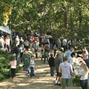 Wild Mushroom Festival Mystic CT New England Fall Events