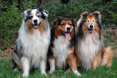 Perros muy hermosos