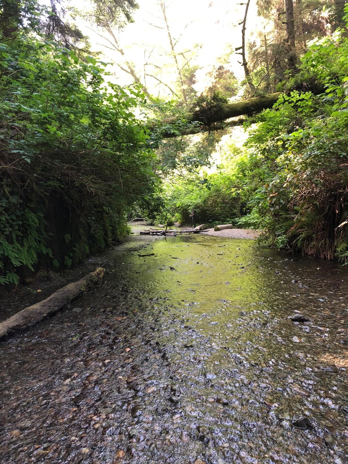 レッドウッド国立公園の画像 p1_37