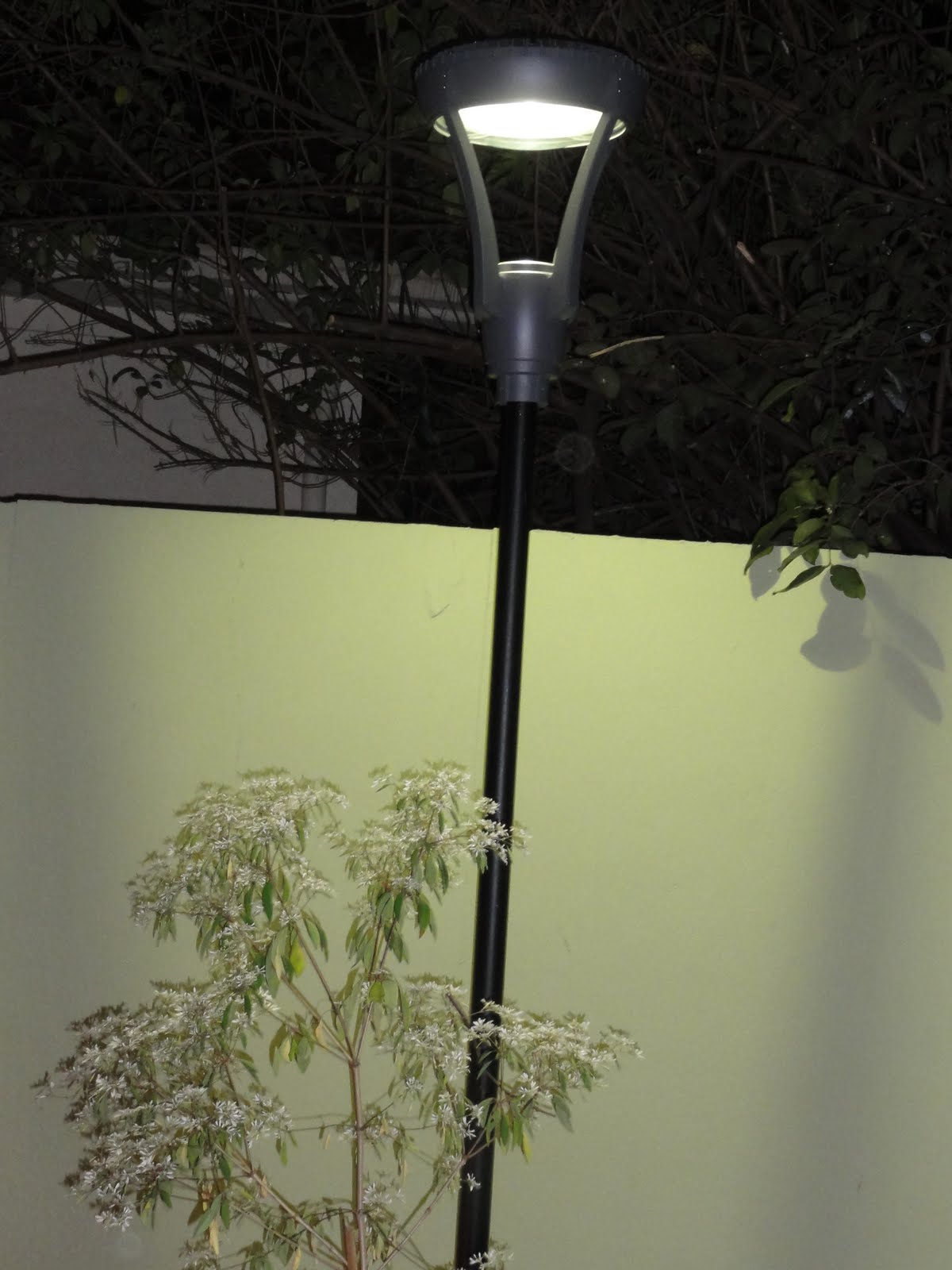 iluminacao jardim verde: que também me forneceu o refletor em led que ilumina a parede verde
