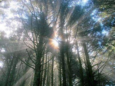 light beams in trees