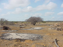 As queimadas na caatinga para a produção de lavouras