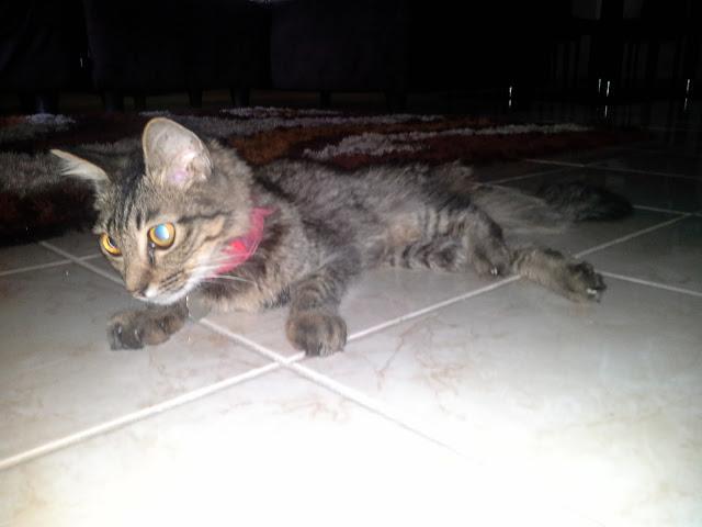 Virus Fip Yang Bahaya Kepada Kucing Skodeng Sana Sini