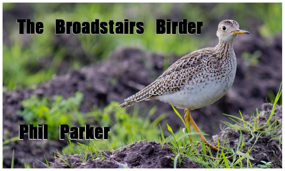 The Broadstairs Birder