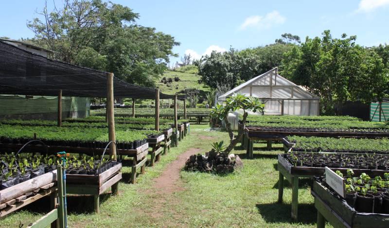 Taiko bolet n del vivero mataveri otai el vivero for Tipos de viveros forestales