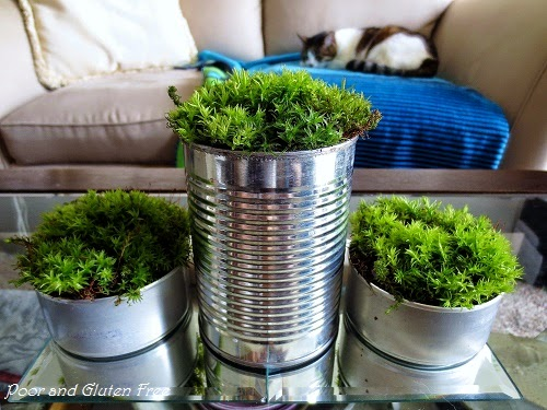 Easy Tin Can And Moss Planters / Centerpieces