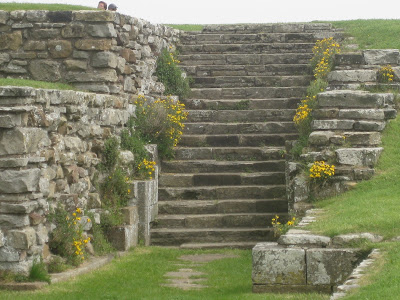Yellow flowers growing along the ruined steps of Whitby Abbey