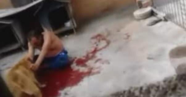 Sempre Curioso: O mais sangrento ataque de pitbull