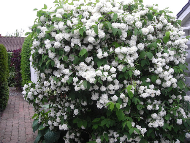 Mit lille gods: min skønne hvide have!