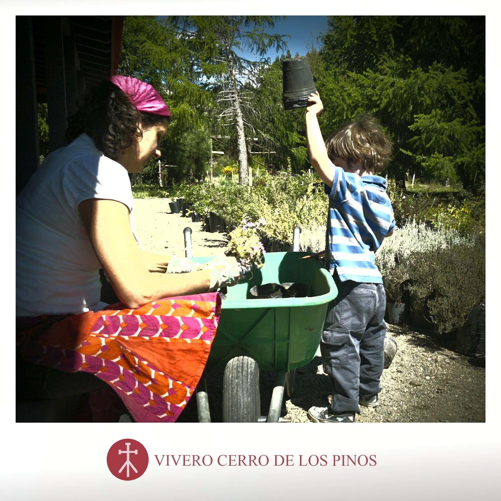 Vivero cerro de los pinos con asistente for Vivero los penotes