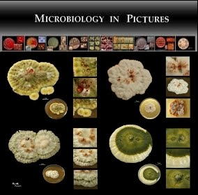 Microbiology In Pictures