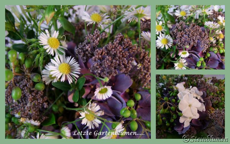letzte Gartenblumen