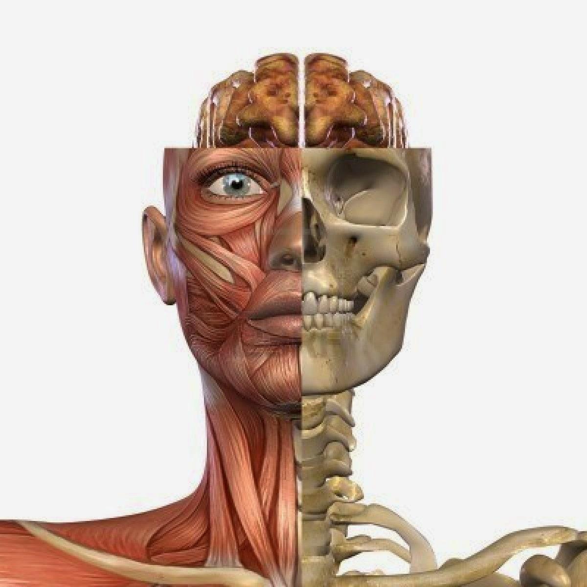 Morfofunción: Cabeza y cuello: introducción de la página