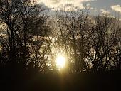 Naplemente az erdőben.♥