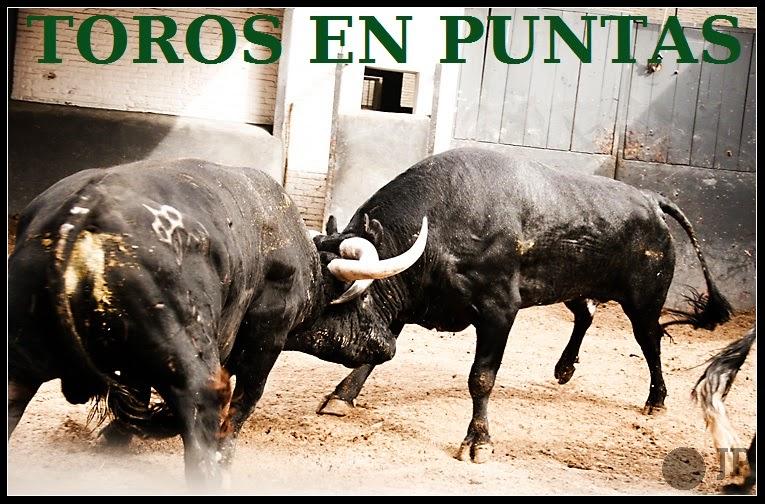 TOROS EN PUNTAS