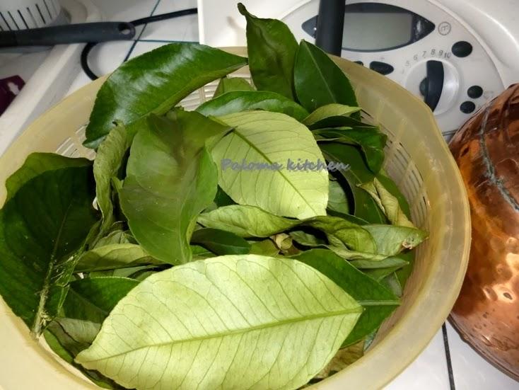 Mes petites passions hydrolat l 39 alambic des feuilles de for Amaryllis ne fait que des feuilles