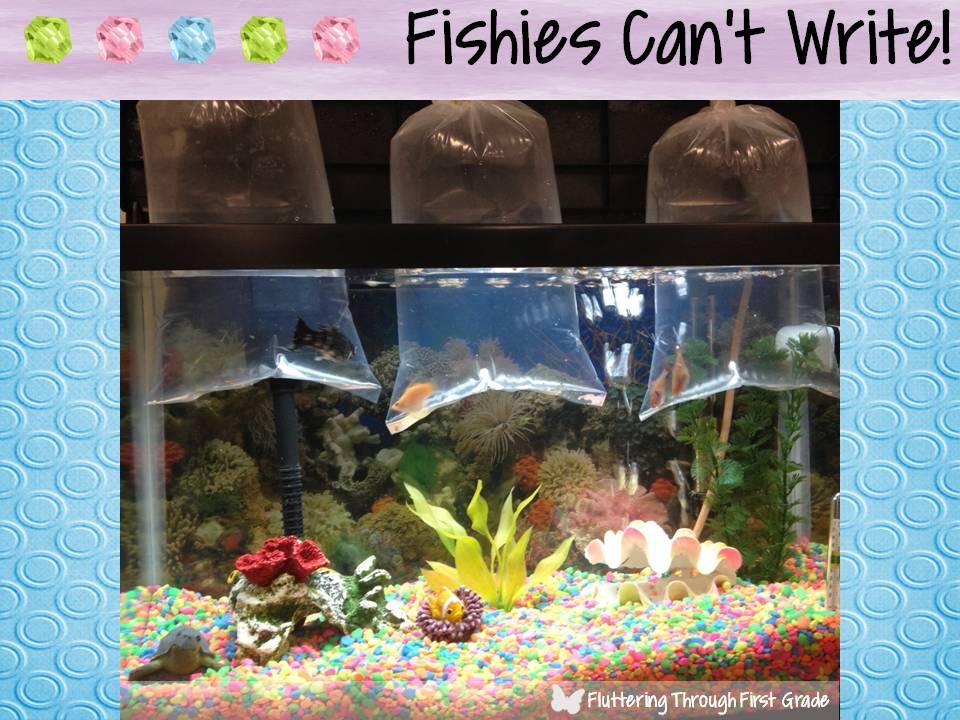 Classroom Aquarium Ideas : Fluttering through first grade bright ideas hop