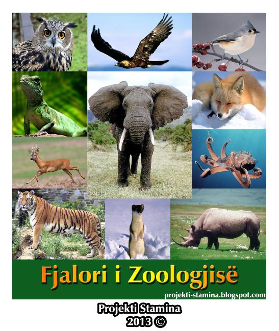 Zoologjia