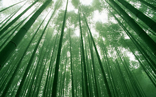 Bamboo Wallpapers - Bambo Froest Wallpaper